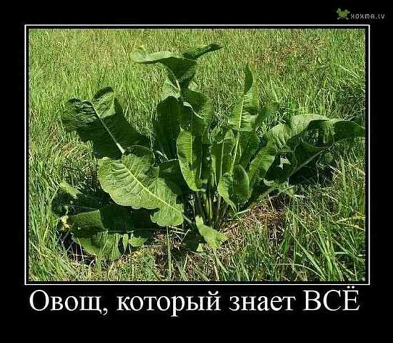 http://122012.imgbb.ru/user//3/063be8fa9c47d347136eb4559ef5a2d0.jpg