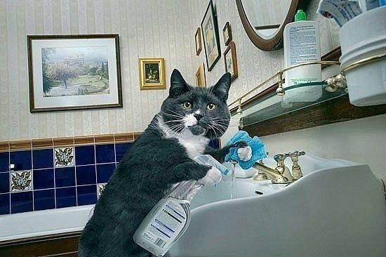 Самая лучшая на свете помощница по уборке квартиры может прийти к Вам на уборку!