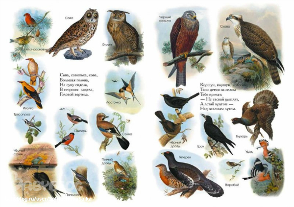Картинки зимующих птиц бесплатно
