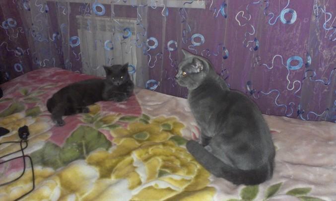 Почему кошка не беременеет после вязки
