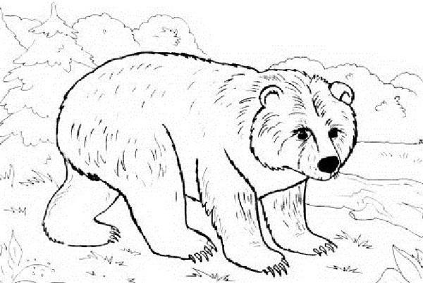 Медведь картинка раскраска