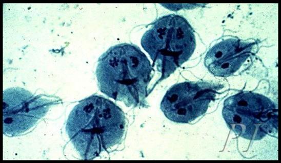 сдать анализы на аллергию в краснодаре