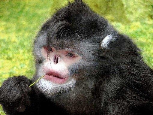 Картинки по запросу смешные обезьяны