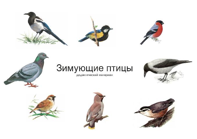 Перелетные птицы: названия для детей, описание, список. Фото 18