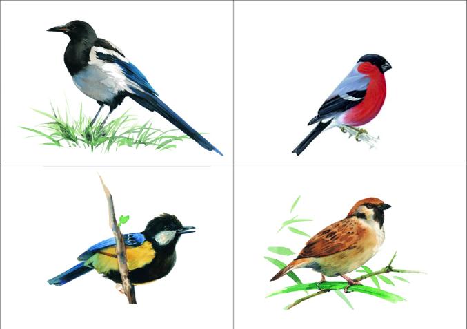 картинки для детей-птицы