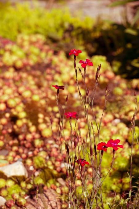 Фото летние цветы в природе 26