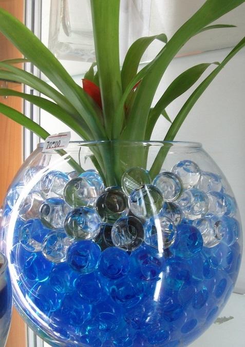 Растения для выращивания в гидрогеле 59