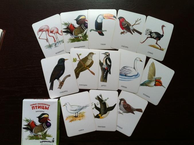 Дидактические Игры Про Птиц