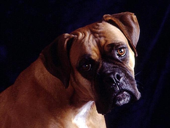 Ищу схемы собак