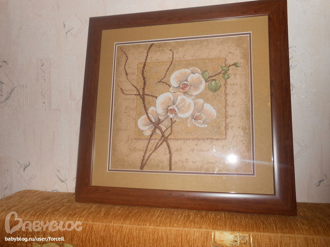 Восточные орхидеи.