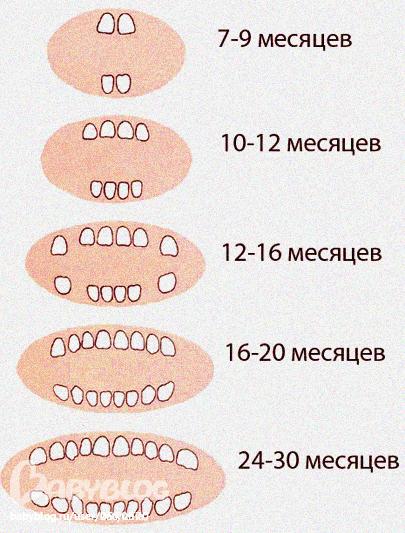 когда у детей лезут зубы таблица