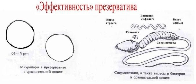 За какое время вырабатвается сперма