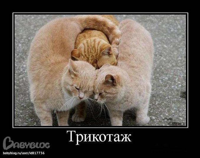 Прикольные коты в ожидании - ce4c